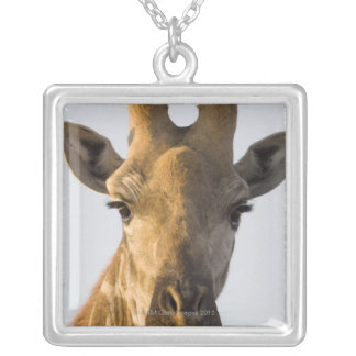 Giraffe (Giraffa camelopardalis) portrait, Imire Silver Plated Necklace