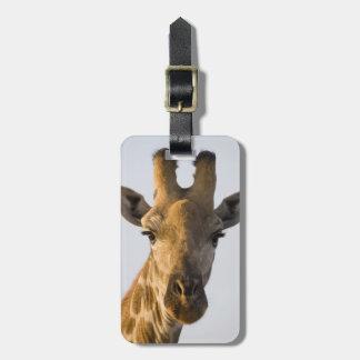 Giraffe (Giraffa camelopardalis) portrait Luggage Tag