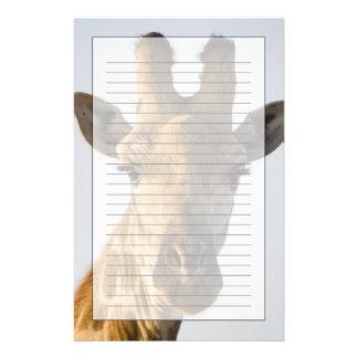 Giraffe (Giraffa camelopardalis) portrait Stationery
