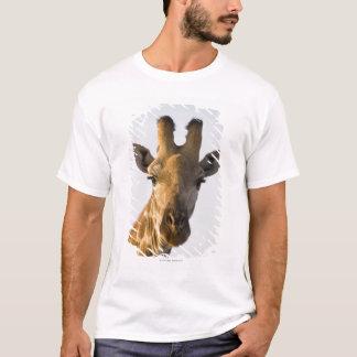 Giraffe (Giraffa camelopardalis) portrait T-Shirt
