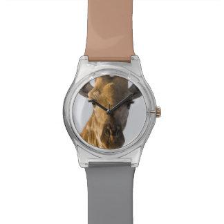 Giraffe (Giraffa camelopardalis) portrait Watch