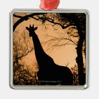 Giraffe (Giraffa camelopardalis) silhouette Silver-Colored Square Decoration