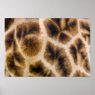 Giraffe (Giraffa Camelopardalis) Skin Poster