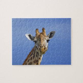 Giraffe, Giraffa camelopardalis tippelskirchi, Jigsaw Puzzle