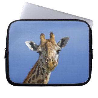 Giraffe, Giraffa camelopardalis tippelskirchi, Laptop Sleeve