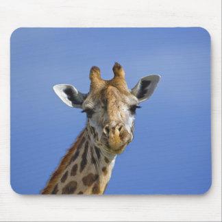 Giraffe, Giraffa camelopardalis tippelskirchi, Mouse Mat