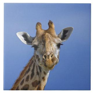 Giraffe, Giraffa camelopardalis tippelskirchi, Tile