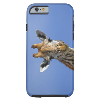Giraffe, Giraffa camelopardalis tippelskirchi, Tough iPhone 6 Case