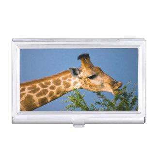 Giraffe (Giraffe Camelopardalis) Feeding Business Card Cases