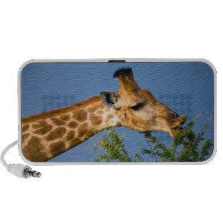 Giraffe (Giraffe Camelopardalis) Feeding Travel Speaker