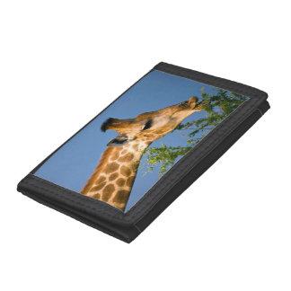 Giraffe (Giraffe Camelopardalis) Feeding Trifold Wallet