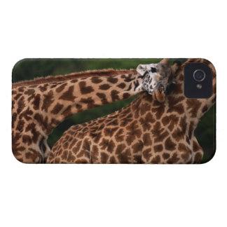Giraffe (Giraffe camelopardalis tippleskirchi) iPhone 4 Case