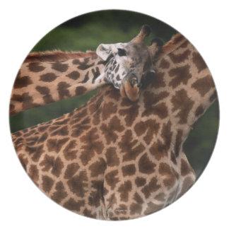 Giraffe (Giraffe camelopardalis tippleskirchi) Plate