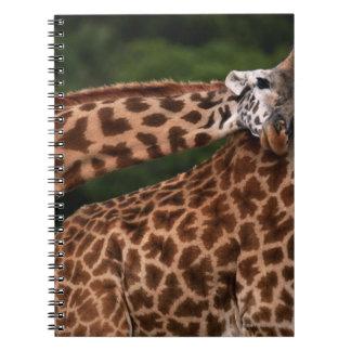 Giraffe (Giraffe camelopardalis tippleskirchi) Spiral Notebook