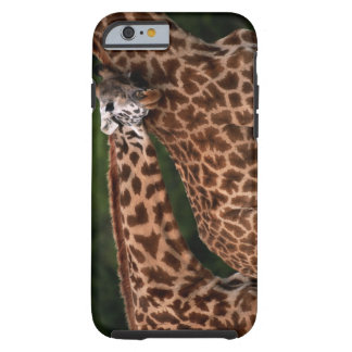 Giraffe (Giraffe camelopardalis tippleskirchi) Tough iPhone 6 Case