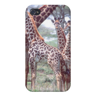 Giraffe Group or Herd w/ Young, Giraffa Cover For iPhone 4