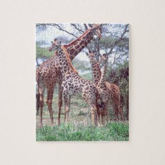 Giraffe Group or Herd w/ Young, Giraffa Jigsaw Puzzle