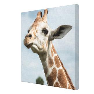Giraffe Head Among the Clouds Canvas Print