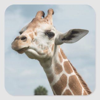 Giraffe Head Among the Clouds Square Sticker