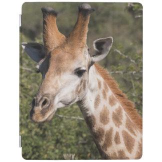 Giraffe Head Detail iPad Cover
