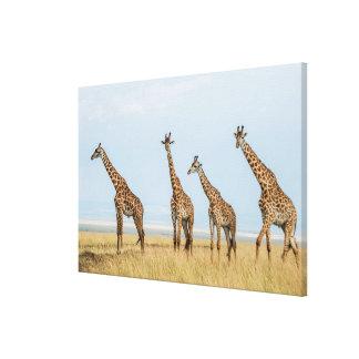 Giraffe Herd in Grassland Canvas Print