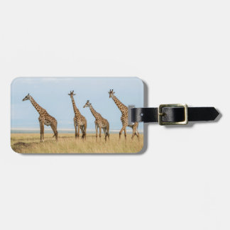 Giraffe Herd in Grassland Luggage Tag