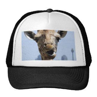 Giraffe Hey Cap