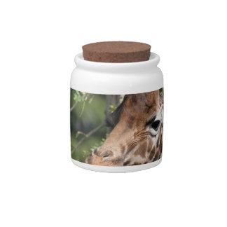 Giraffe Images  Candy Jar
