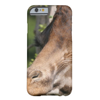 Giraffe Images Barely There iPhone 6 Case