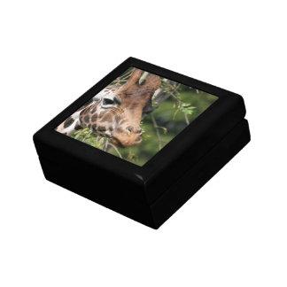 Giraffe Images Gift Box