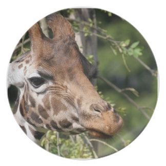 Giraffe Images  Plate