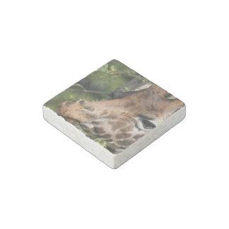 Giraffe Images Stone Magnet
