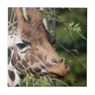 Giraffe Images  Tile