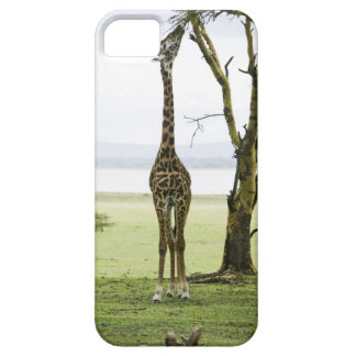 Giraffe in Kenya, Africa Barely There iPhone 5 Case