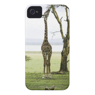 Giraffe in Kenya, Africa Case-Mate iPhone 4 Cases