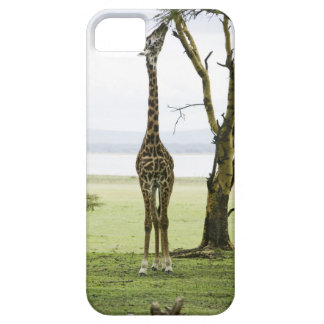 Giraffe in Kenya, Africa iPhone 5 Covers