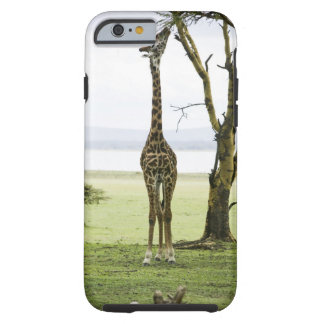 Giraffe in Kenya, Africa Tough iPhone 6 Case