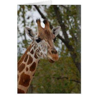Giraffe in natural habitat card
