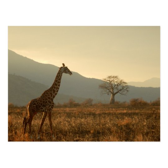 Giraffe in the Savannah Postcard