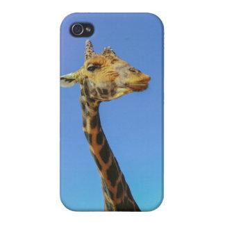 Giraffe iPhone 4/4S Cases
