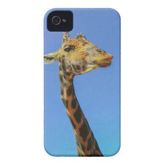 Giraffe iPhone 4 Case-Mate Cases