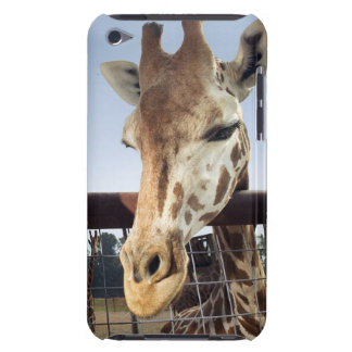 Giraffe iPod Touch Cases