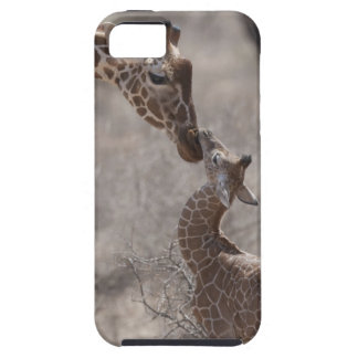 Giraffe, Kenya, Africa iPhone 5 Cover