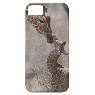 Giraffe, Kenya, Africa iPhone 5 Cover