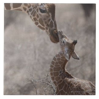 Giraffe, Kenya, Africa Tile