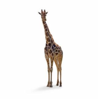 Giraffe Key Chain Photo Sculptures