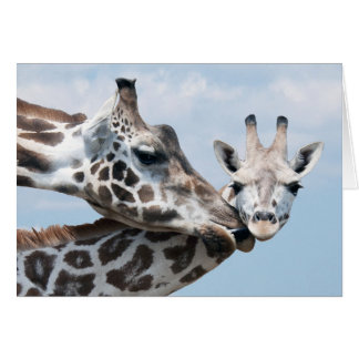 Giraffe Kisses Her Calf Card