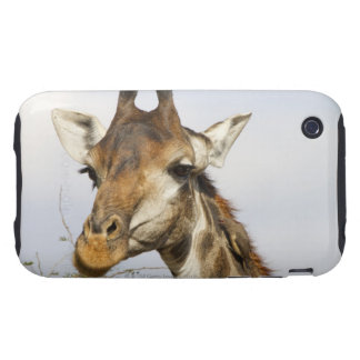 Giraffe, Kruger National Park, South Africa iPhone 3 Tough Cases