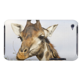 Giraffe, Kruger National Park, South Africa Case-Mate iPod Touch Case