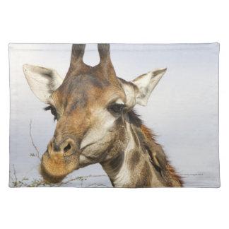 Giraffe, Kruger National Park, South Africa Place Mats